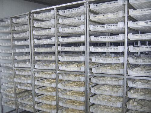 máy sấy hoa quả công nghiệp